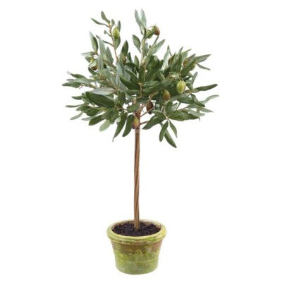 Olive Branch Topiary 22""
