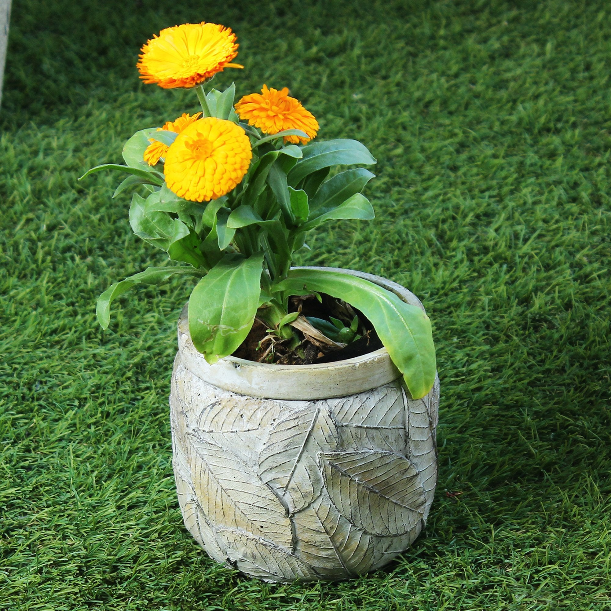 Planter With Cement Finish