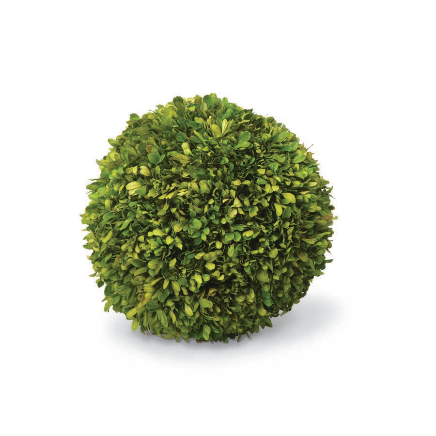 "7"" Preserved Boxwood Ball"