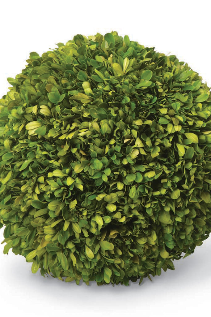 "11"" Preserved Boxwood Ball"