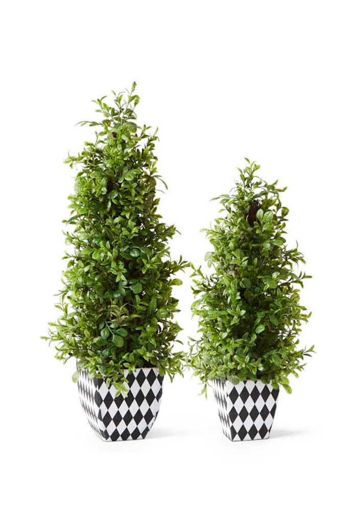 Large Pointed Topiary in Harlequin Pot