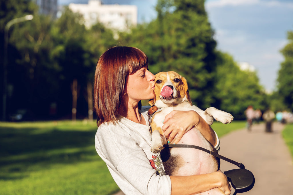 How to Spot Beagle Health Issues