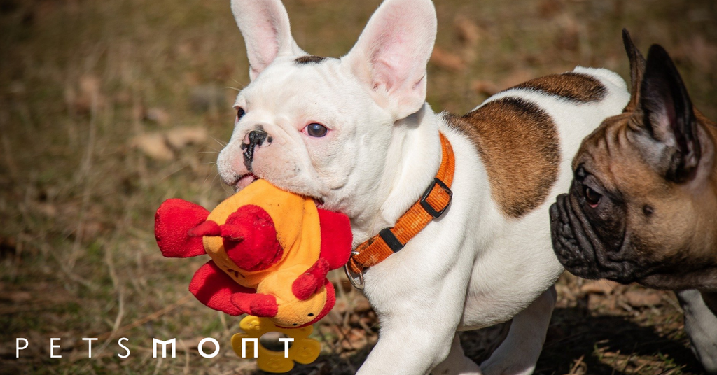 5 Puppy Chew Toys You Need to Know