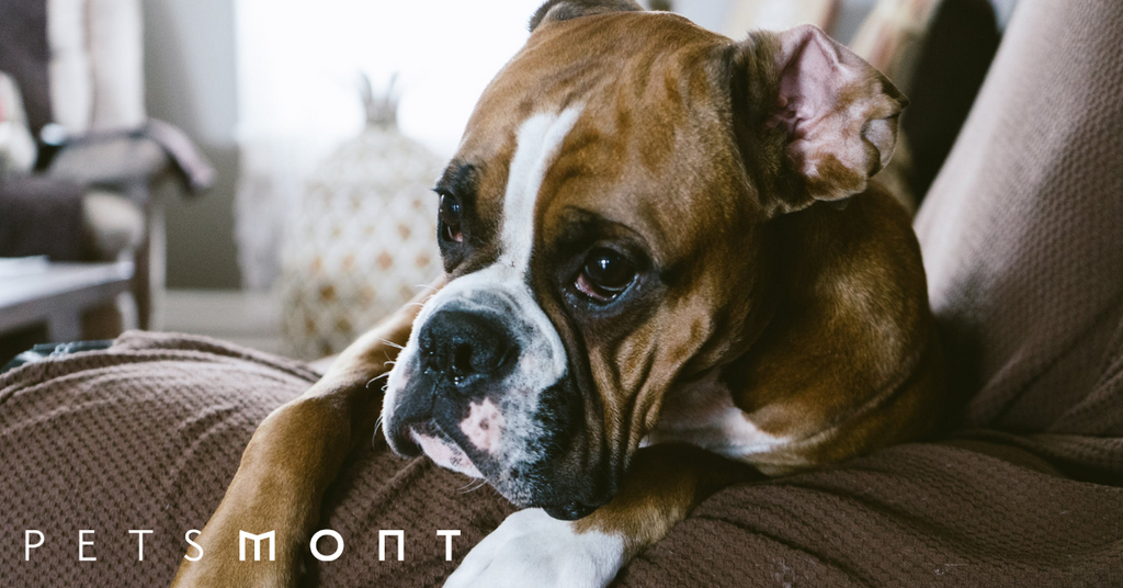 What Is The Best Dog Food For Boxers?