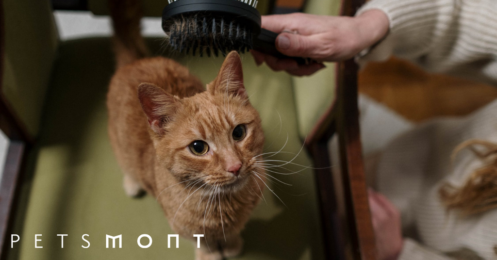 How to Groom a Cat: Good to Know Tips and Tricks