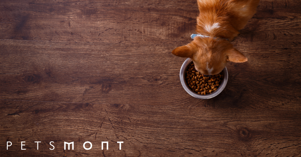Natural Diet for Dogs: How to Supplement It