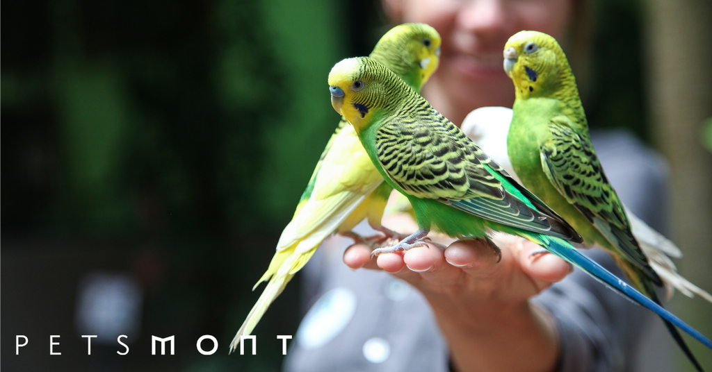 Know These Top 5 Types of Parrots