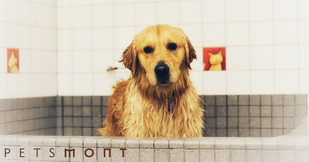 Dog Hygiene: What Do You Need to Know?