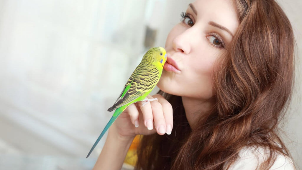 Five Reasons A Bird Makes The Perfect First Pet For You