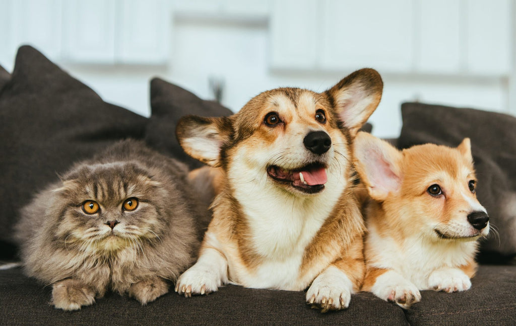 The Risks and the Benefits of Pets