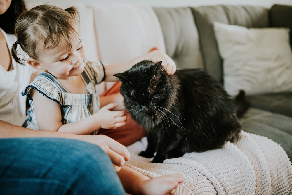 Do Cats Love Their Owner: Here Is What We Know
