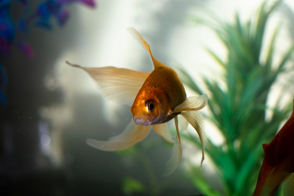 Here's The Right Way To Clean Your Fish Tank