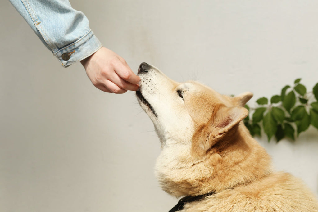 Vet-Recommended Dog Food: Feeding Your Dog the Best Food