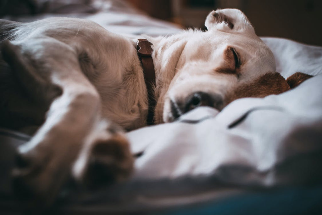 Is My Dog Sick? Here are Three Warning Signs