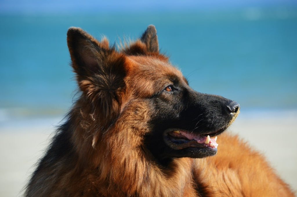 Here Are The 5 Best Guard Dog Breeds