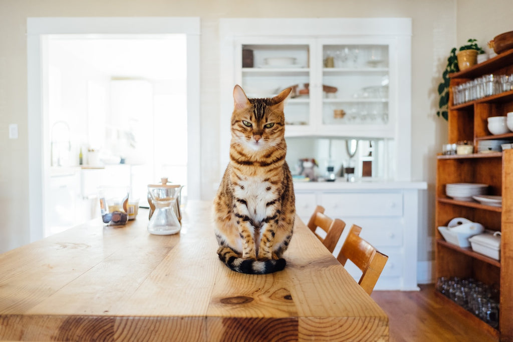 What Is The Best Cat Food For Weight Loss?
