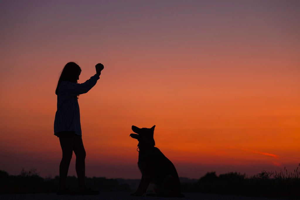 How To Become A Dog Trainer: Your Complete Guide