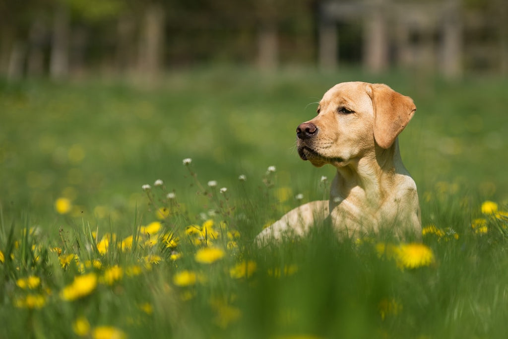 The Best Dog Food for Active Dogs