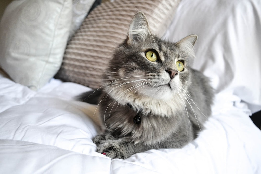 Most Popular Cat Breeds: Get to Know These Wonderful Felines
