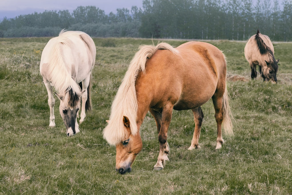 Different Horse Breeds: Get to Know Them