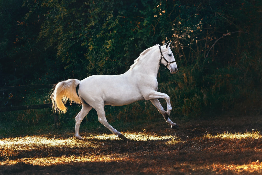 What Is the Average Lifespan of a Horse?