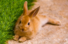 10 Awesome Tips For Wonderful Pet Rabbit Care