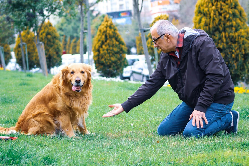 Here Are 3 Changes You Need To Know For Your Senior Dog's Diet