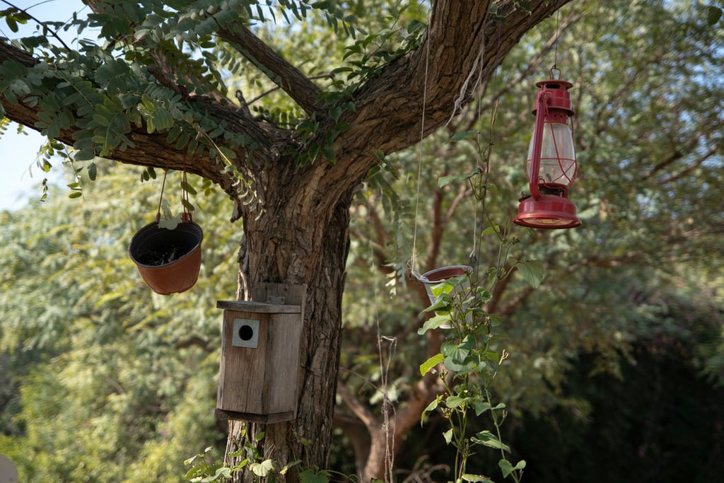 What Are the Best Bird Feeders?