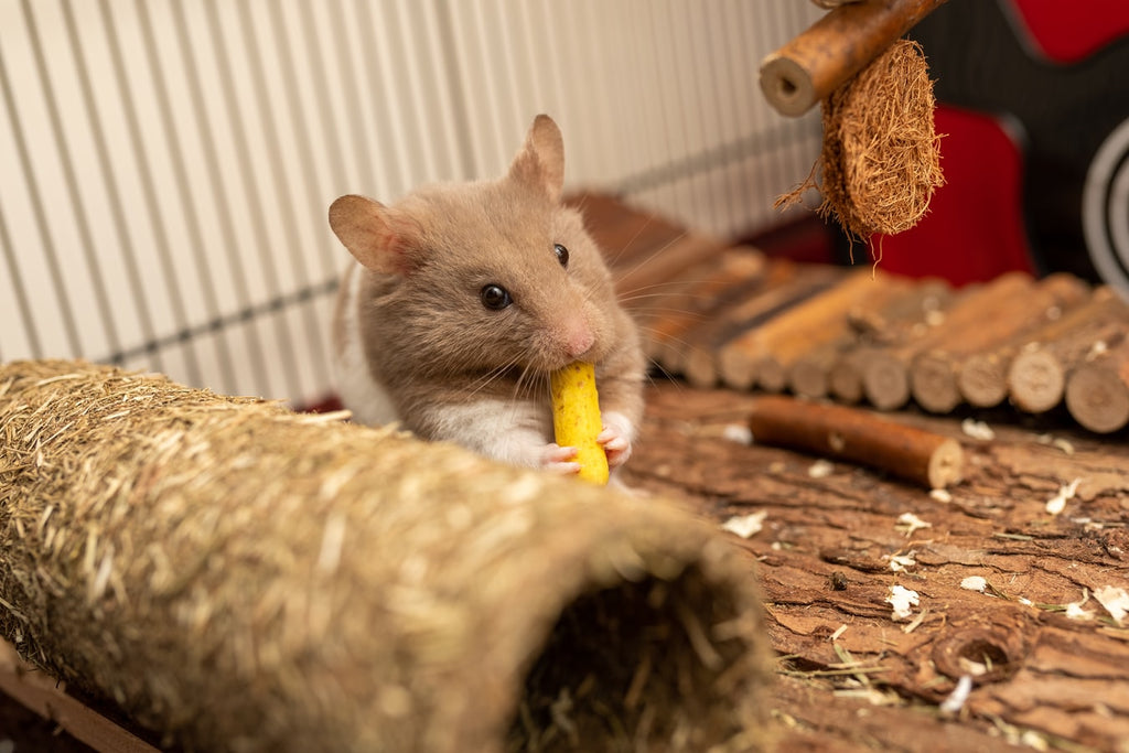 What Is the Perfect Hamster Diet?