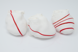 POCUS Heart Slice Models (Set of 3)