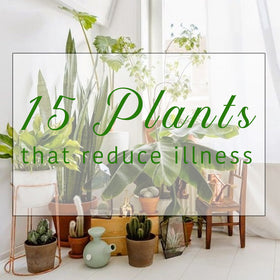 15 Plants That Have Known to Reduce Illness