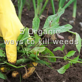 5 effective organic ways to get rid of weeds