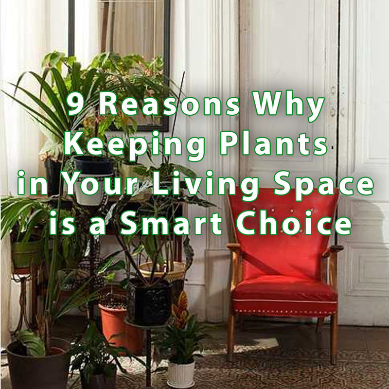 9 Reasons Why Keeping Plants in Your Living Space is a Smart Choice