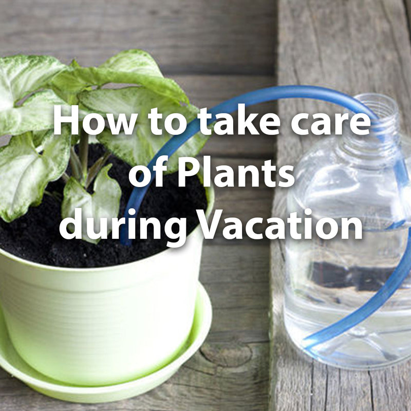 How to take care of plants during Vacation