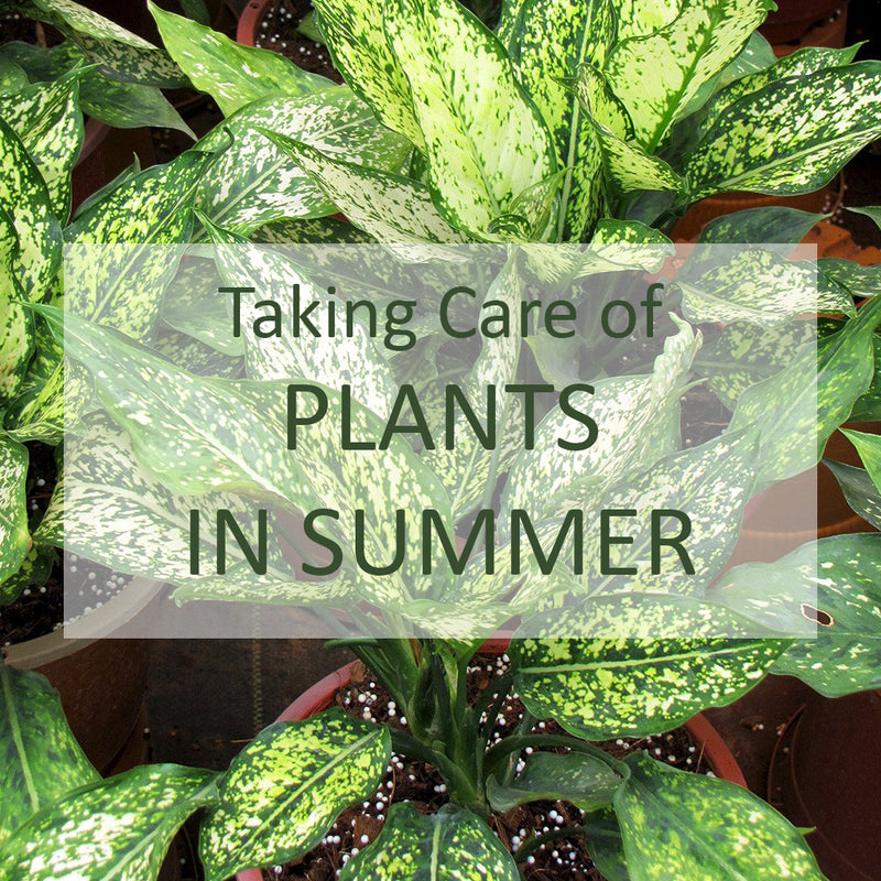How to Take Care of Your Plants in this Summer