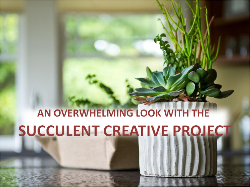 Give Your Garden An Overwhelming Look With The Succulent Creative Project