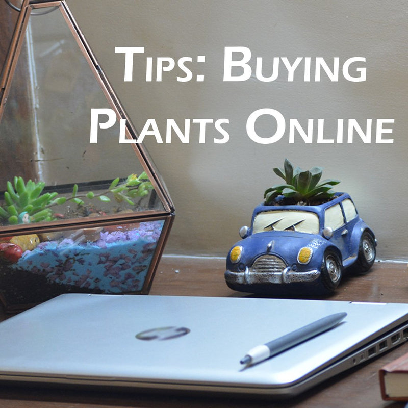 Tips - How to Order Live Plants Online?