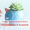 3 main points to keep in mind while purchasing a planter