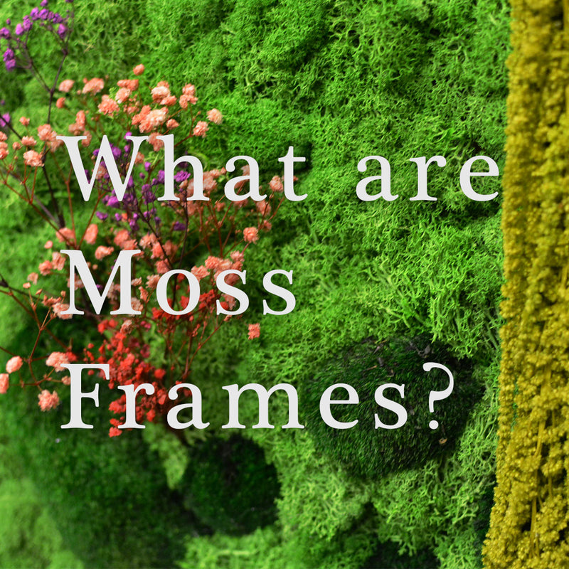 What are Moss Frames/Walls?