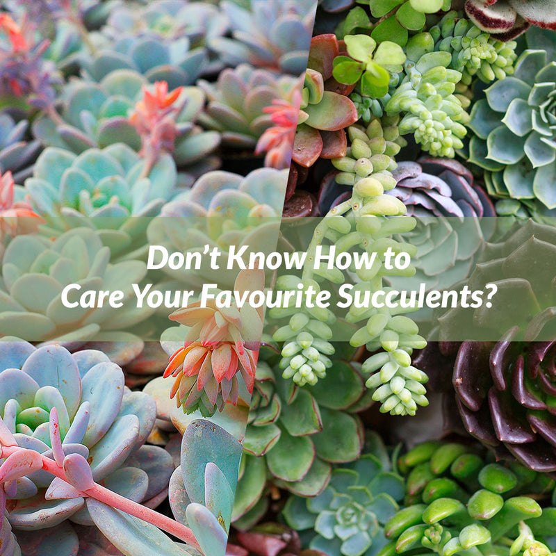 Don't Know How To Care Your Favourite Succulents? Do These Things To Give Them Proper Growth
