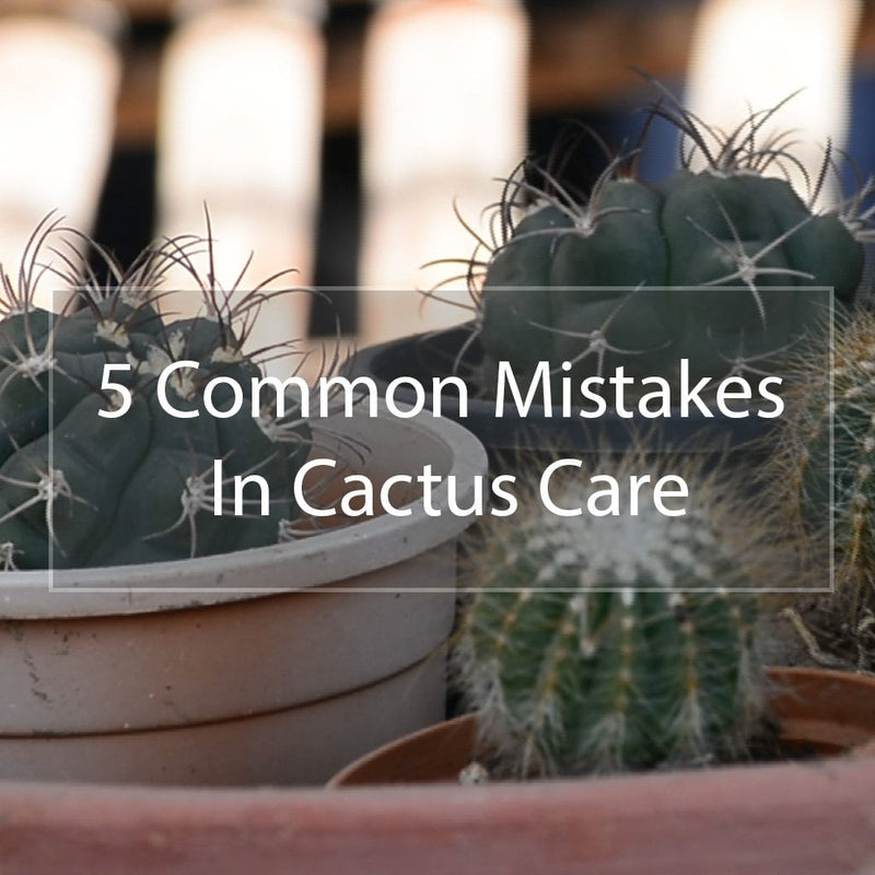 5 Common Mistakes in Cactus Care