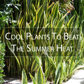 Cool Plants to beat the Summer Heat