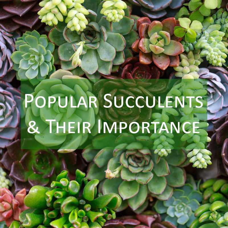 Popular Succulent Plants & Their Importance For Your Garden