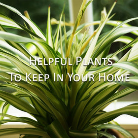 Helpful Plants to keep in your Home