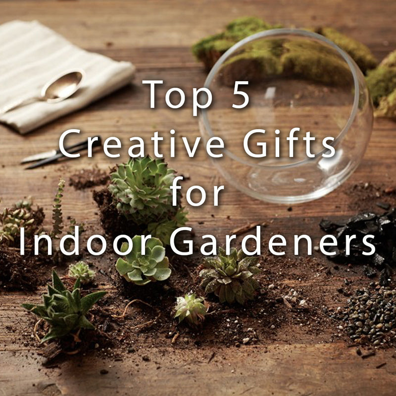 Top 5 Creative Gifts for Indoor Gardeners
