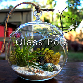 Glass Pots