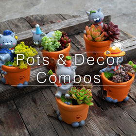 Pots & Decor Combo Packs!