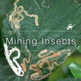 Mining Insects