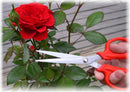 Flower Scissor In Red