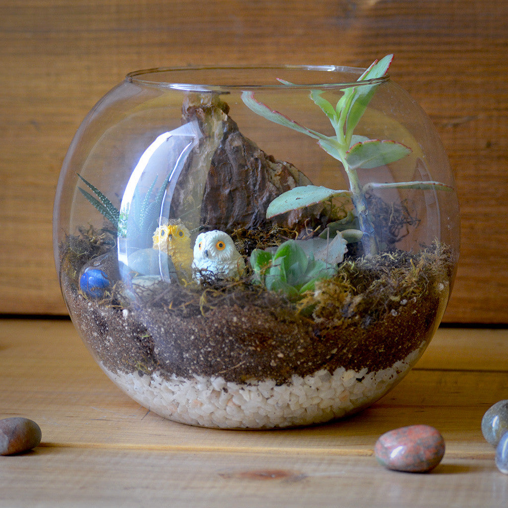 Starry Nights Terrarium Kit Decor myBageecha - myBageecha